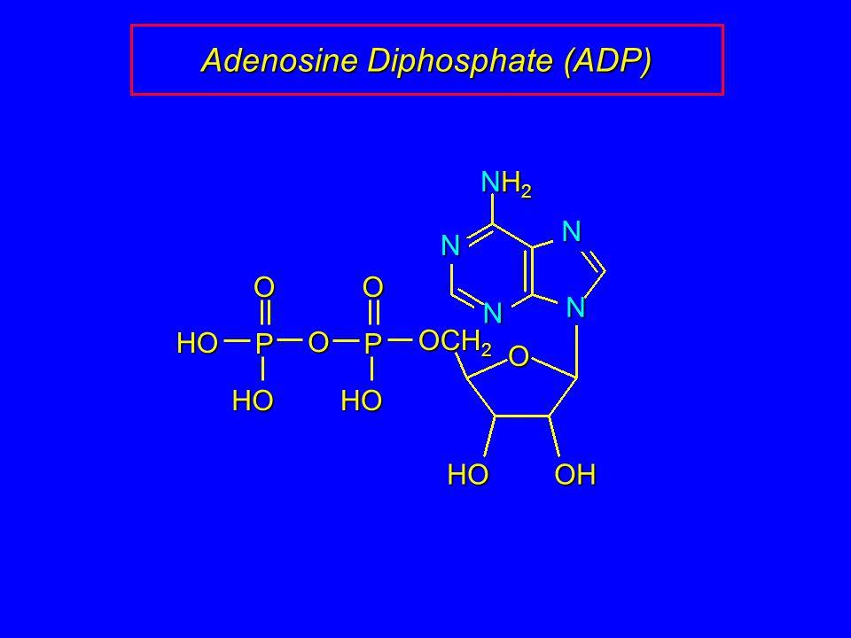 Adenosine Diphosphate (ADP) N N N N O OHHO NH2NH2NH2NH2 OCH 2 P O O HO P O HO HO