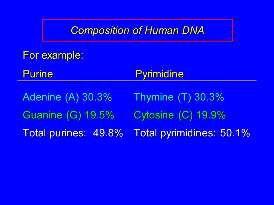 Composition of Human DNA Adenine (A) 30.3%Thymine (T) 30.3% Guanine (G) 19.5%Cytosine (C) 19.9% Total purines: 49.8%Total pyrimidines: 50.1% For examp