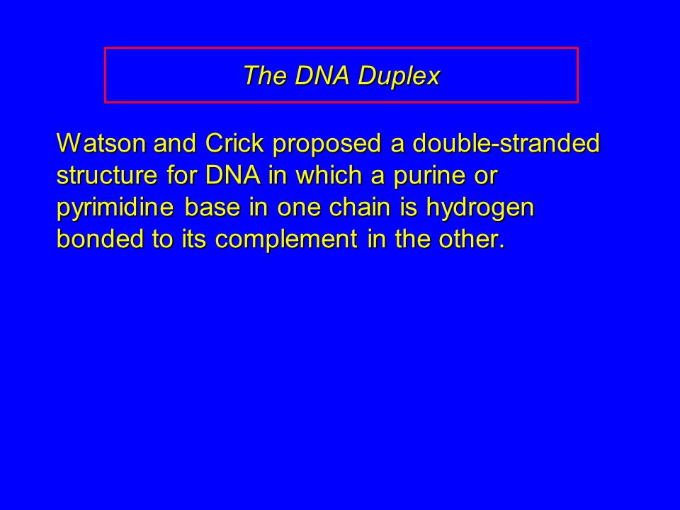 The DNA Duplex Watson and Crick proposed a double-stranded structure for DNA in which a purine or pyrimidine base in one chain is hydrogen bonded to its complement in the other.