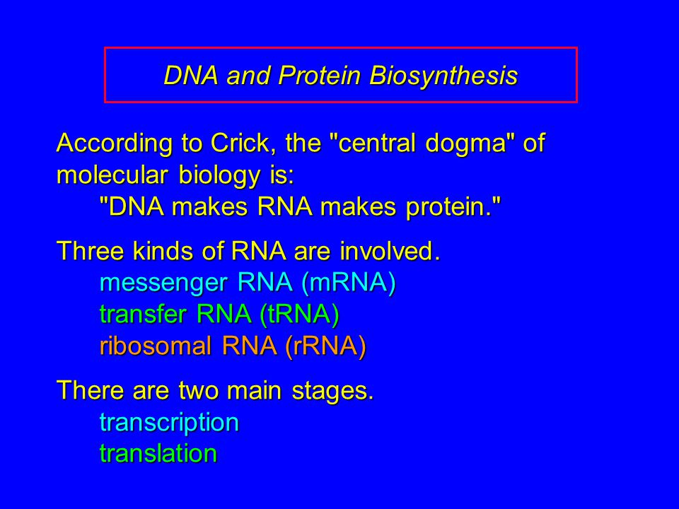 DNA and Protein Biosynthesis According to Crick, the