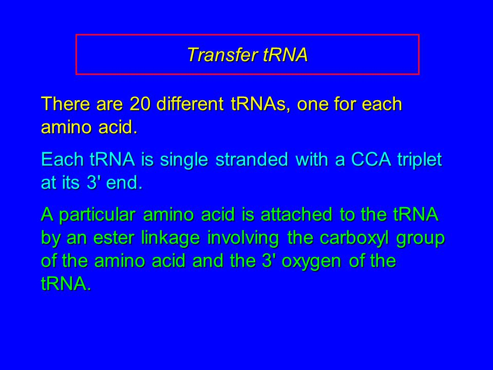 Transfer tRNA There are 20 different tRNAs, one for each amino acid.