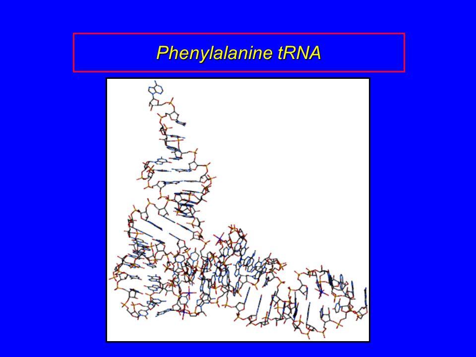 Phenylalanine tRNA