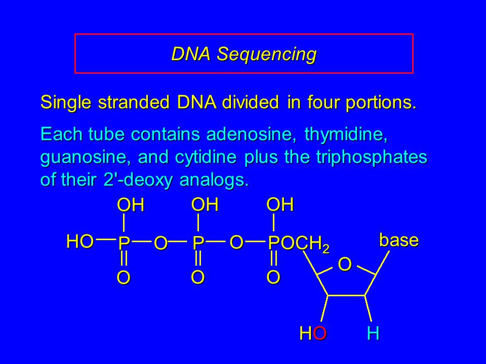 DNA Sequencing Single stranded DNA divided in four portions. Each tube contains adenosine, thymidine, guanosine, and cytidine plus the triphosphates o