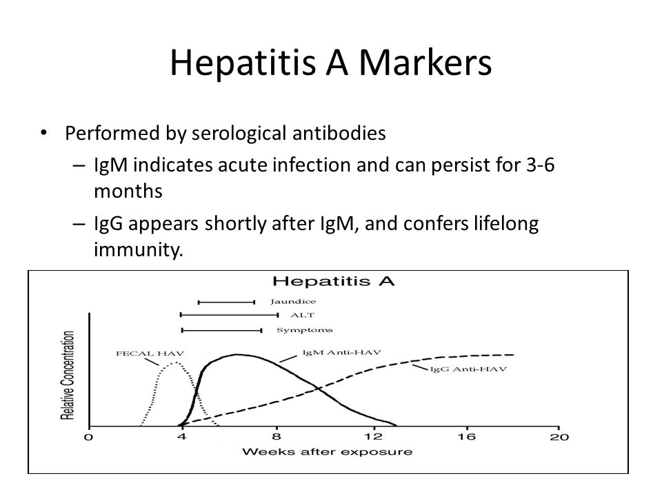 Hepatitis A Markers Performed by serological antibodies – IgM indicates acute infection and can persist for 3-6 months – IgG appears shortly after IgM, and confers lifelong immunity.