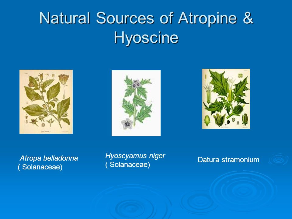 Natural Sources of Atropine & Hyoscine Atropa belladonna ( Solanaceae) Hyoscyamus niger ( Solanaceae) Datura stramonium