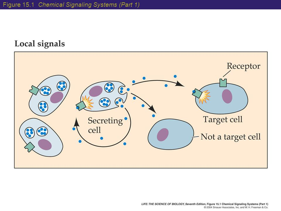 Figure 15.1 Chemical Signaling Systems (Part 1)