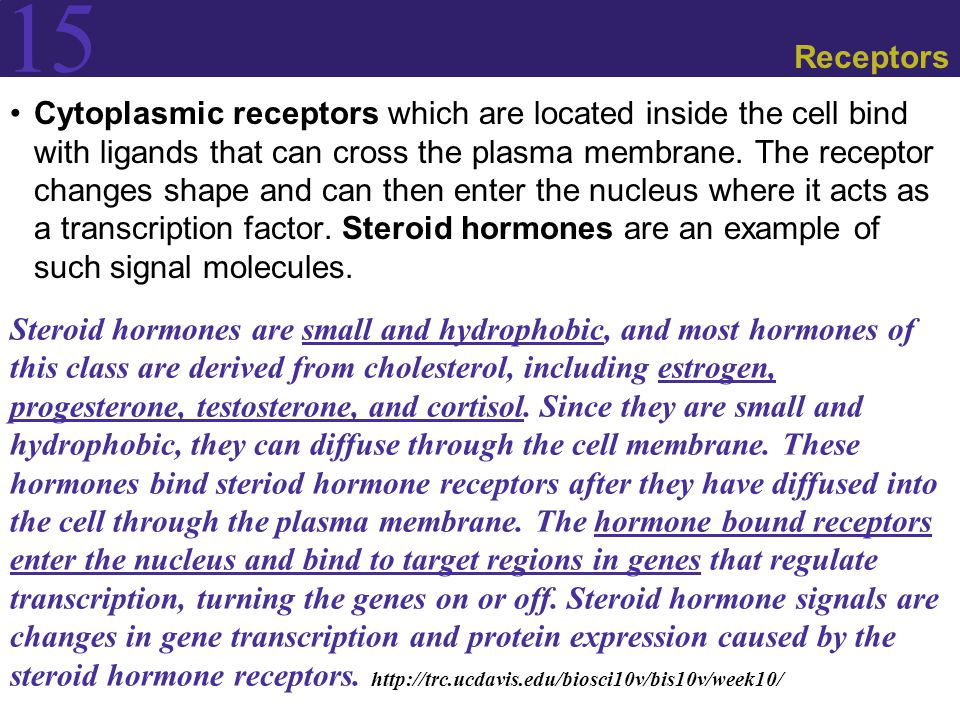 15 Receptors Cytoplasmic receptors which are located inside the cell bind with ligands that can cross the plasma membrane.