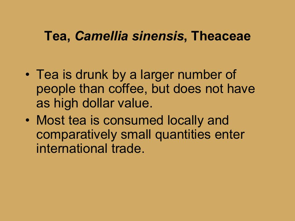 Tea, Camellia sinensis, Theaceae Tea is drunk by a larger number of people than coffee, but does not have as high dollar value.