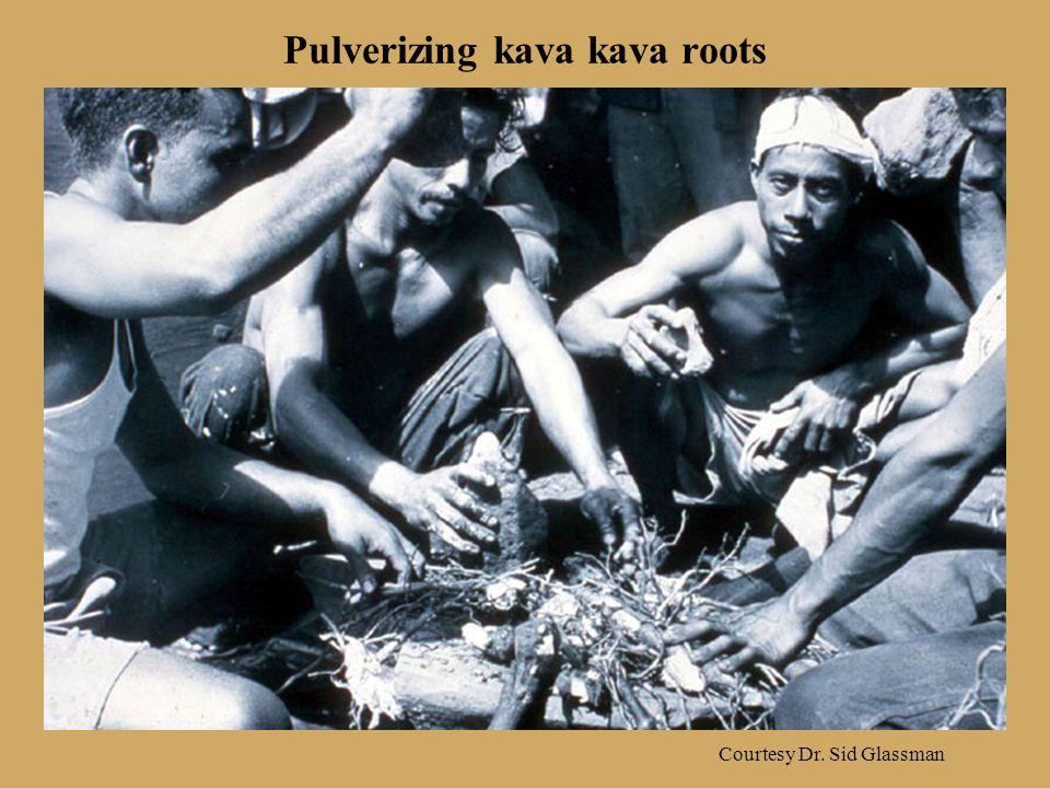 Pulverizing kava kava roots Courtesy Dr. Sid Glassman