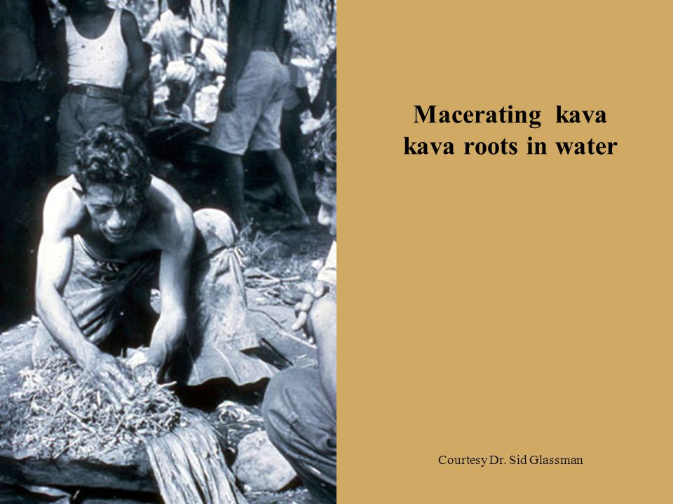 Macerating kava kava roots in water Courtesy Dr. Sid Glassman
