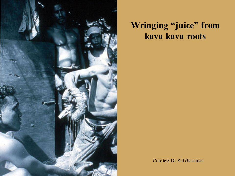 "Wringing ""juice"" from kava kava roots Courtesy Dr. Sid Glassman"