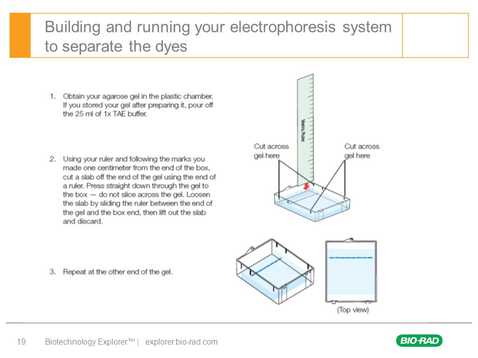 Biotechnology Explorer™ | explorer.bio-rad.com 19 Building and running your electrophoresis system to separate the dyes