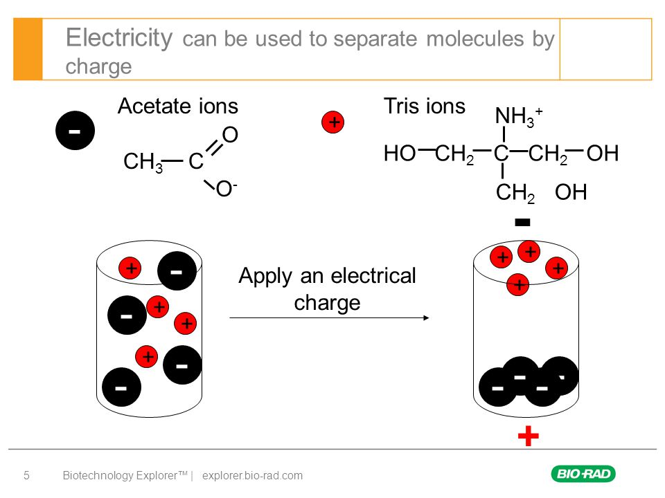 Biotechnology Explorer™ | explorer.bio-rad.com 5 Electricity can be used to separate molecules by charge Acetate ions Tris ions - + + - + - - - - + + + + - - - - + + + Apply an electrical charge CH 3 C O O-O- HO CH 2 C CH 2 OH NH 3 + CH 2 OH
