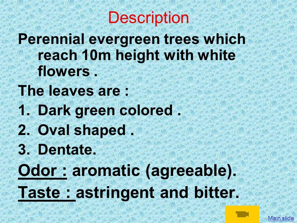 Tea leaves : Folium Theae Camellia sinensis Family: Theaceae Main slide