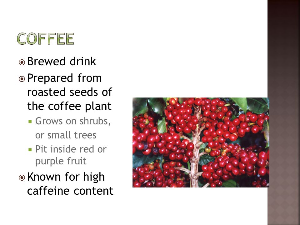  Brewed drink  Prepared from roasted seeds of the coffee plant  Grows on shrubs, or small trees  Pit inside red or purple fruit  Known for high c