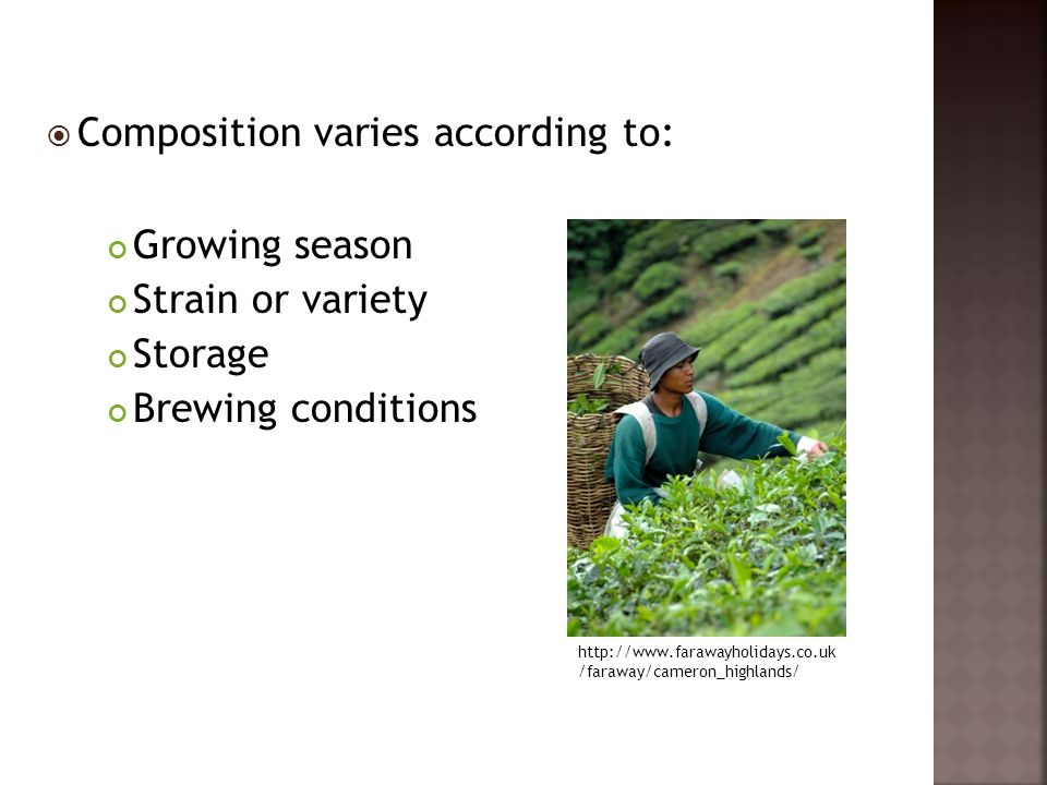  Composition varies according to: Growing season Strain or variety Storage Brewing conditions http://www.farawayholidays.co.uk /faraway/cameron_highl