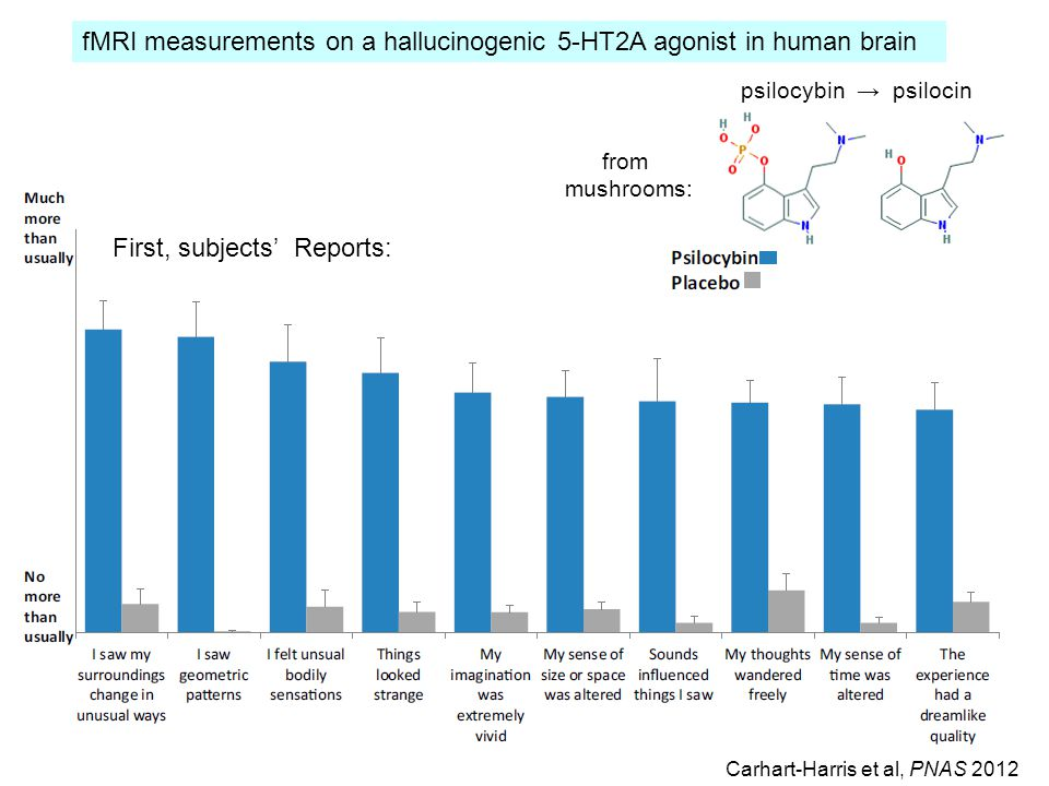 First, subjects' Reports: fMRI measurements on a hallucinogenic 5-HT2A agonist in human brain Carhart-Harris et al, PNAS 2012 psilocybin → psilocin from mushrooms: