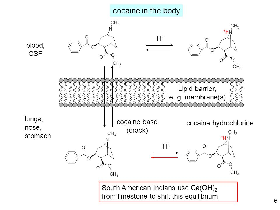 neurotransmitter transporters ligand-activated channels GPCRs G protein-activated channels N C LSD morphine-heroin tetrahydrocannabinol amphetamine cocaine ketamine nicotine ?alcohol.