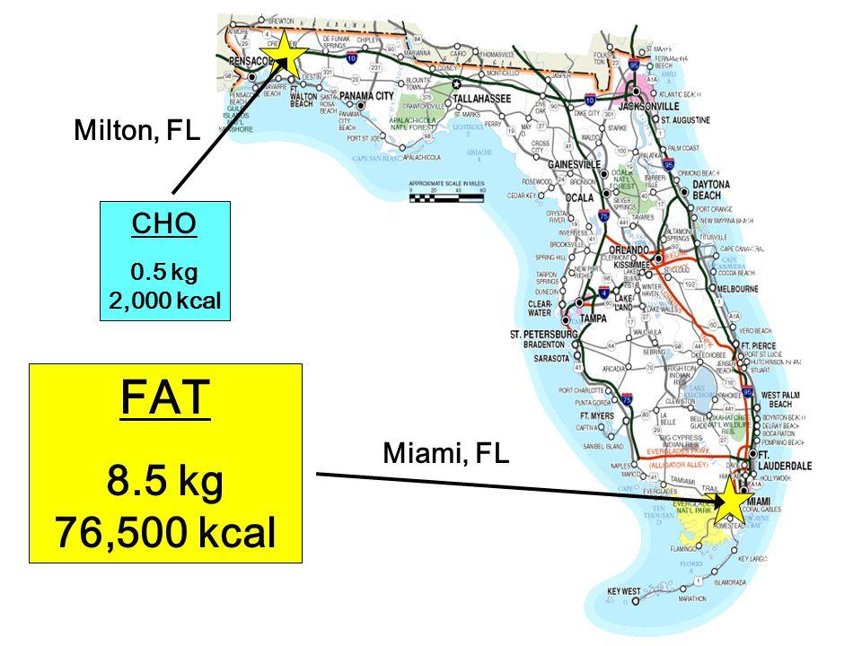 FAT 8.5 kg 76,500 kcal CHO 0.5 kg 2,000 kcal Milton, FL Miami, FL