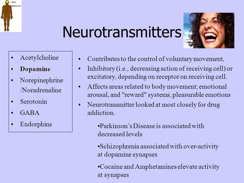 Neurotransmitters Acetylcholine DopamineDopamine Norepinephrine /Noradrenaline Serotonin GABA Endorphins Contributes to the control of voluntary movem
