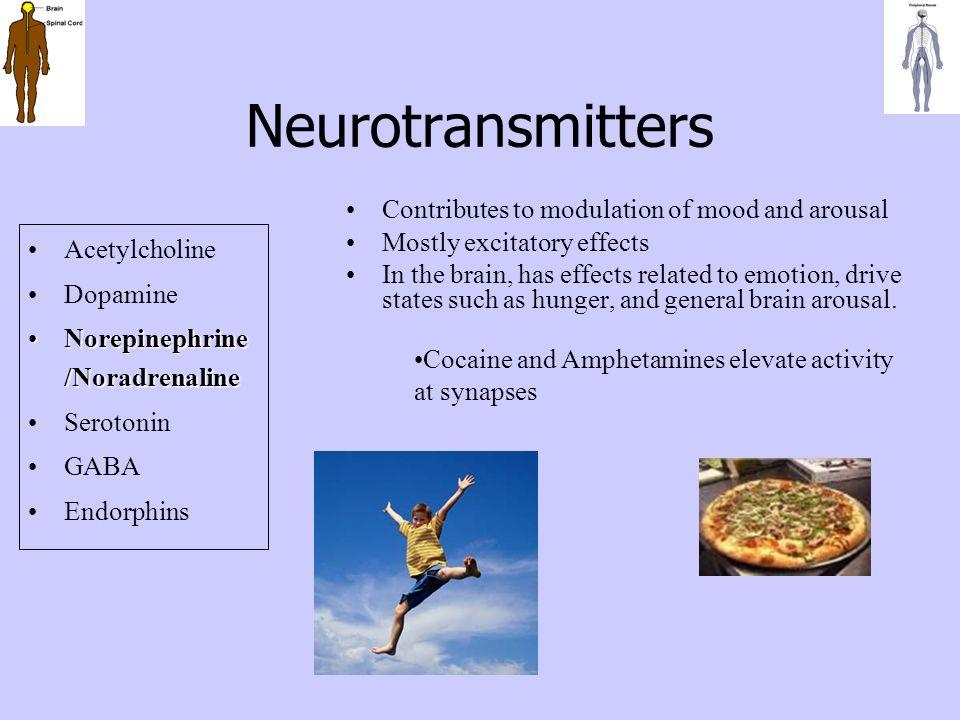 Neurotransmitters Acetylcholine Dopamine Norepinephrine /NoradrenalineNorepinephrine /Noradrenaline Serotonin GABA Endorphins Contributes to modulatio