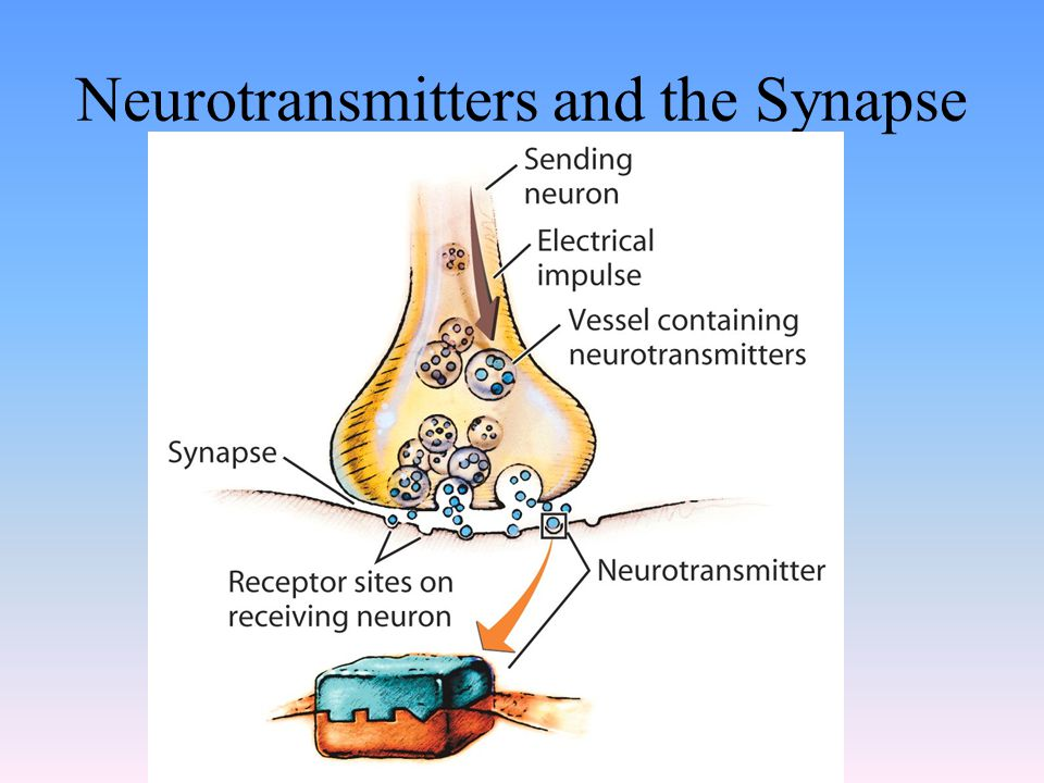 Neurotransmitters and the Synapse