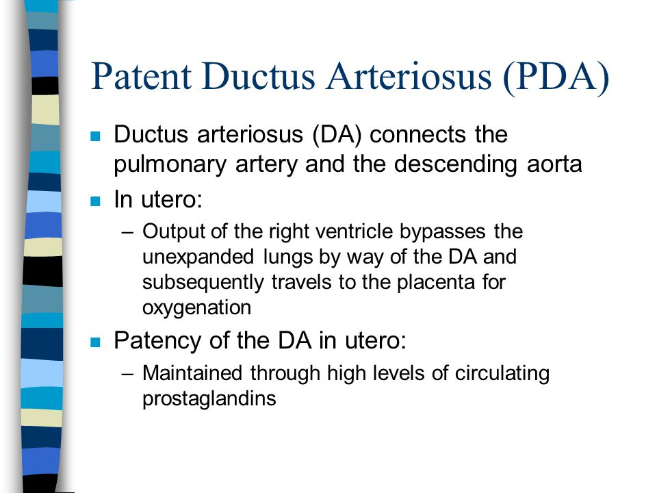 Patent Ductus Arteriosus (PDA) n Ductus arteriosus (DA) connects the pulmonary artery and the descending aorta n In utero: –Output of the right ventricle bypasses the unexpanded lungs by way of the DA and subsequently travels to the placenta for oxygenation n Patency of the DA in utero: –Maintained through high levels of circulating prostaglandins