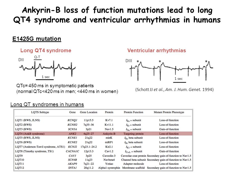 Ankyrin-B loss of function mutations lead to long QT4 syndrome and ventricular arrhythmias in humans Ventricular arrhythmias E1425G mutation Long QT4 syndrome DII DIII (Schott JJ et al., Am.
