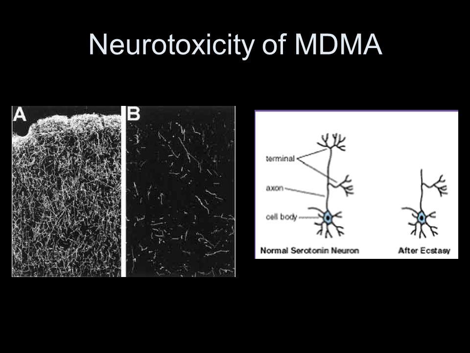 Neurotoxicity of MDMA