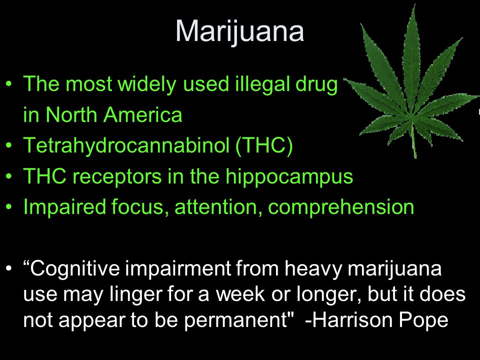 The most widely used illegal drug in North America Tetrahydrocannabinol (THC) THC receptors in the hippocampus Impaired focus, attention, comprehension Cognitive impairment from heavy marijuana use may linger for a week or longer, but it does not appear to be permanent -Harrison Pope Marijuana
