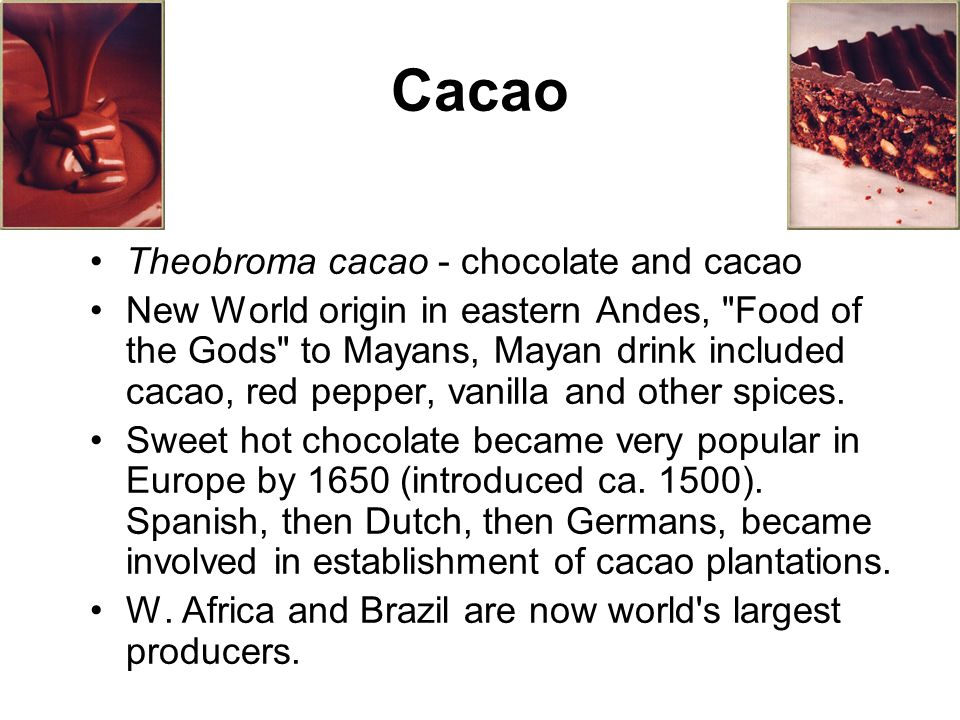 Cacao Theobroma cacao - chocolate and cacao New World origin in eastern Andes, Food of the Gods to Mayans, Mayan drink included cacao, red pepper, vanilla and other spices.