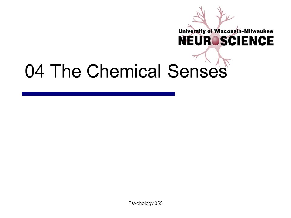 Psychology 3552 Introduction I.Animals depend on the chemical senses to identify nourishment II.Chemical sensation A.Oldest and most common sensory system III.Chemical senses A.Gustation B.Olfaction C.Chemoreceptors