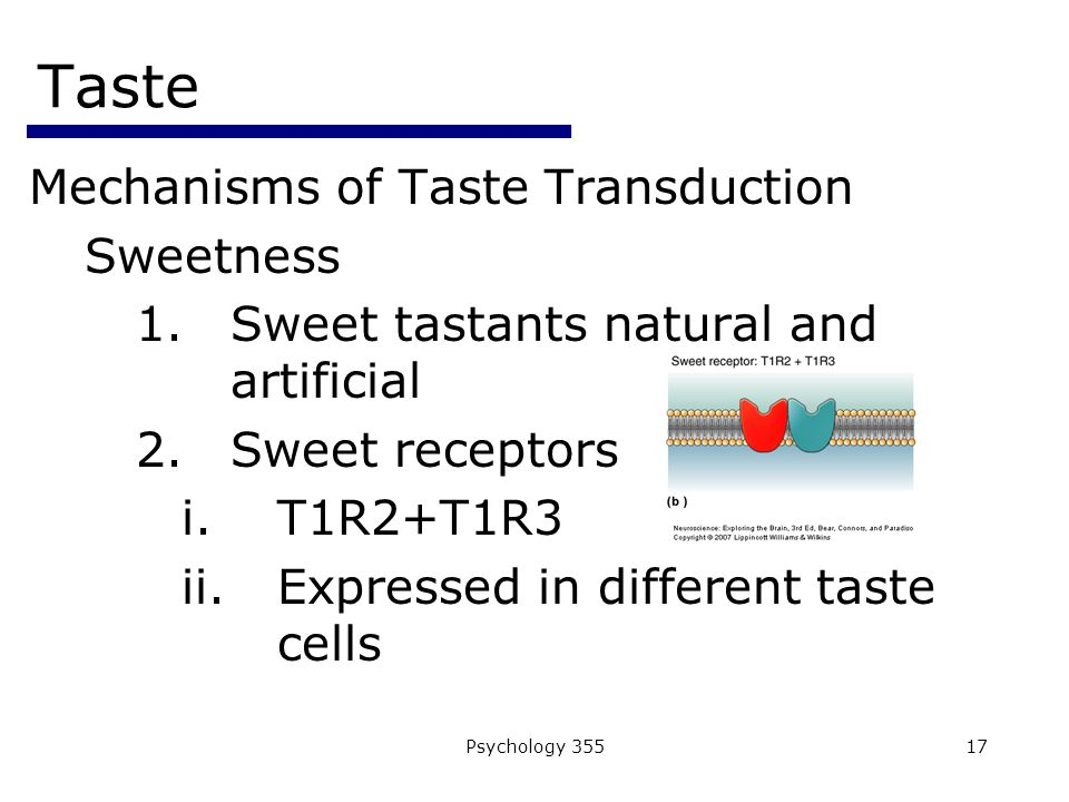 Psychology 35517 Taste Mechanisms of Taste Transduction Sweetness 1.Sweet tastants natural and artificial 2.Sweet receptors i.T1R2+T1R3 ii.Expressed in different taste cells