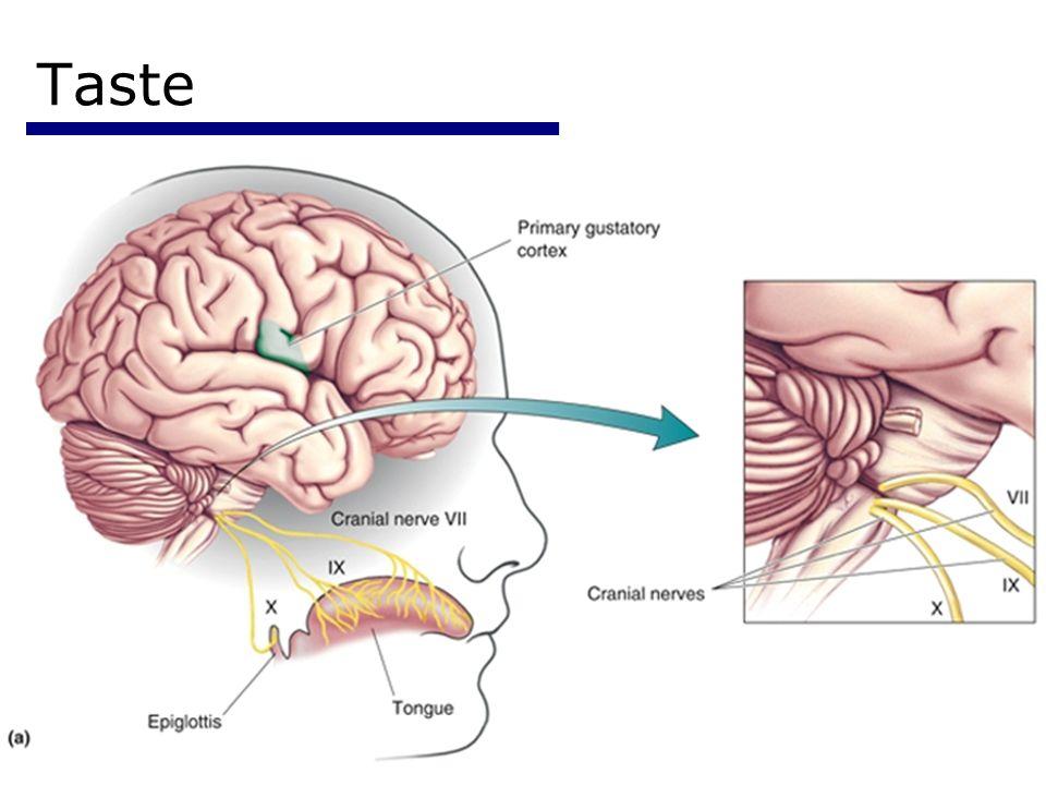 Psychology 35520 Taste