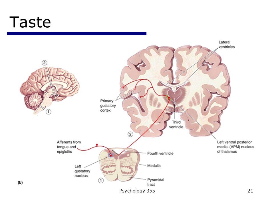 Psychology 35521 Taste