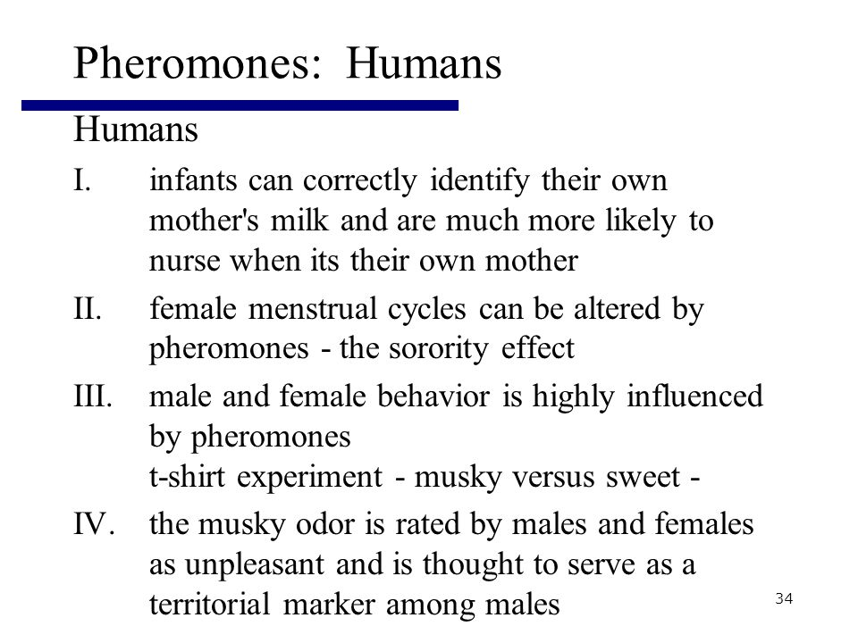 34 Pheromones: Humans Humans I.infants can correctly identify their own mother s milk and are much more likely to nurse when its their own mother II.female menstrual cycles can be altered by pheromones - the sorority effect III.male and female behavior is highly influenced by pheromones t-shirt experiment - musky versus sweet - IV.the musky odor is rated by males and females as unpleasant and is thought to serve as a territorial marker among males