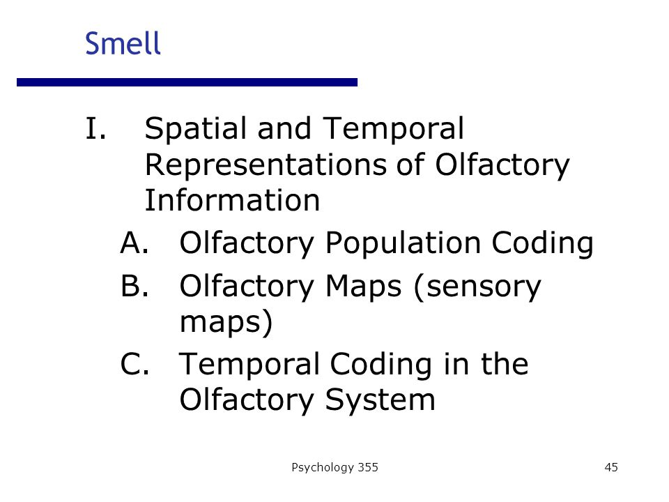 Psychology 35545 I.Spatial and Temporal Representations of Olfactory Information A.Olfactory Population Coding B.Olfactory Maps (sensory maps) C.Temporal Coding in the Olfactory System Smell