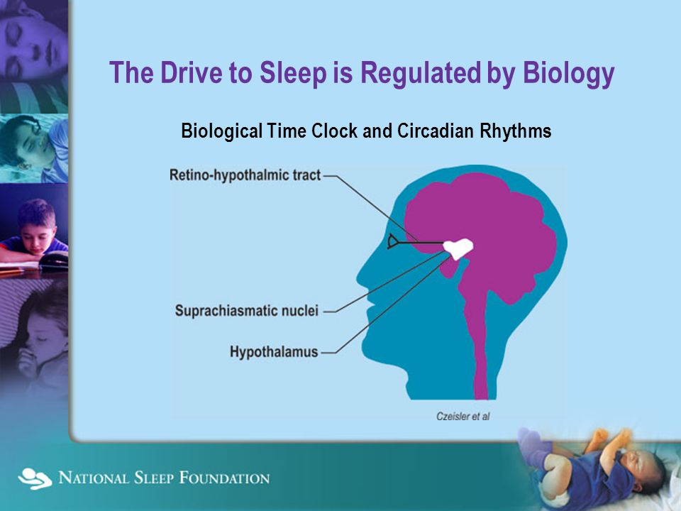 The Drive to Sleep is Regulated by Biology Biological Time Clock and Circadian Rhythms