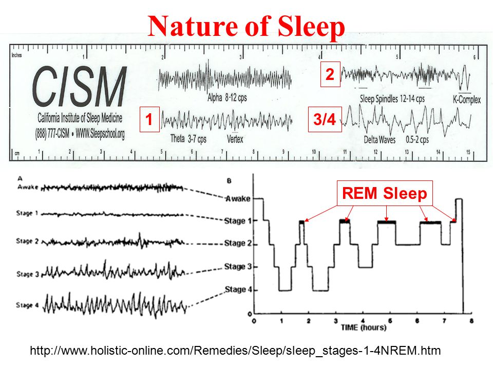 Reference for waves http://www.holistic-online.com/Remedies/Sleep/sleep_stages-1-4NREM.htm Importance of Sleep REM (Rapid Eye Movement) Sleep Delta: deep sleep (Stage 3 and Stage 4) Switch to deeper sleep