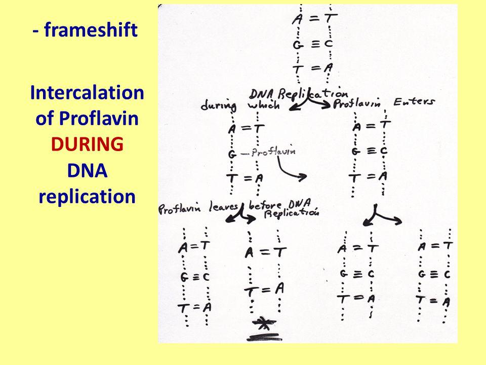 - frameshift Intercalation of Proflavin DURING DNA replication