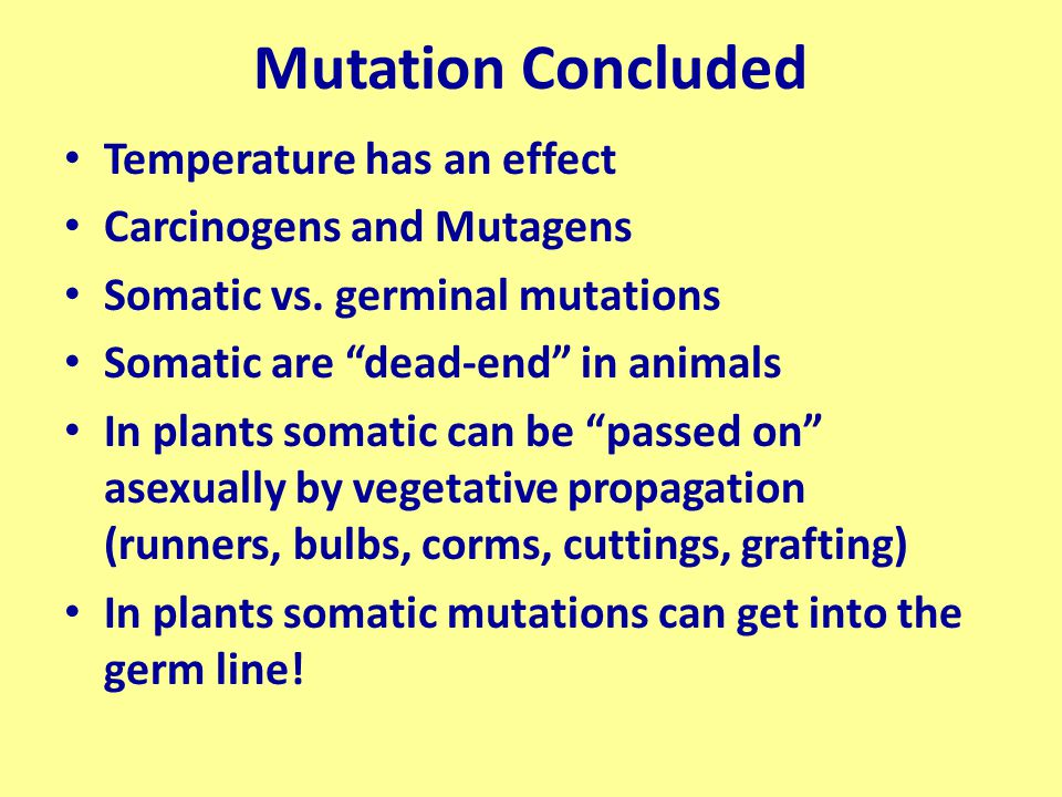 """Mutation Concluded Temperature has an effect Carcinogens and Mutagens Somatic vs. germinal mutations Somatic are """"dead-end"""" in animals In plants somat"""