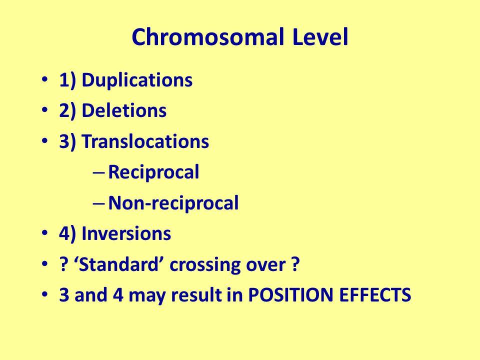Chromosomal Level 1) Duplications 2) Deletions 3) Translocations – Reciprocal – Non-reciprocal 4) Inversions .