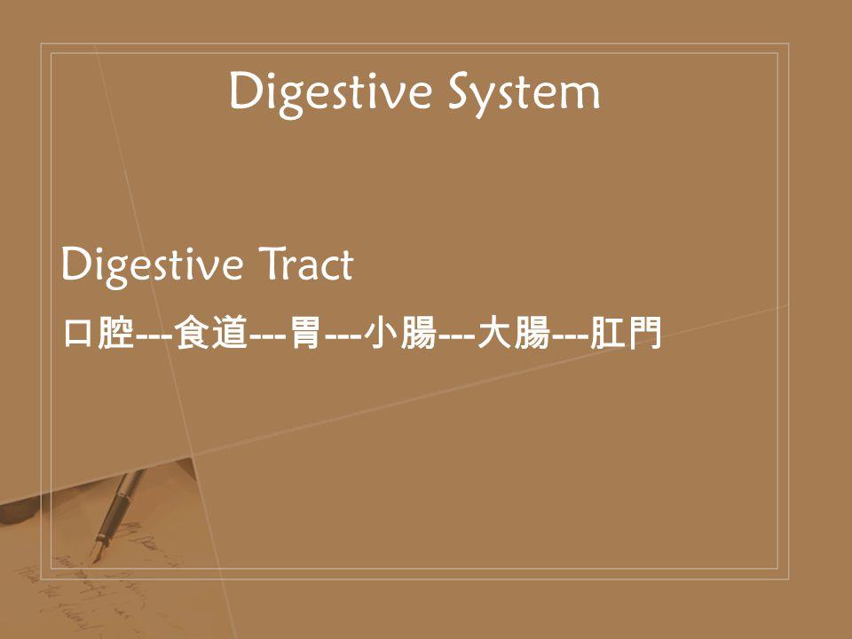 Digestive System Digestive Tract 口腔 --- 食道 --- 胃 --- 小腸 --- 大腸 --- 肛門