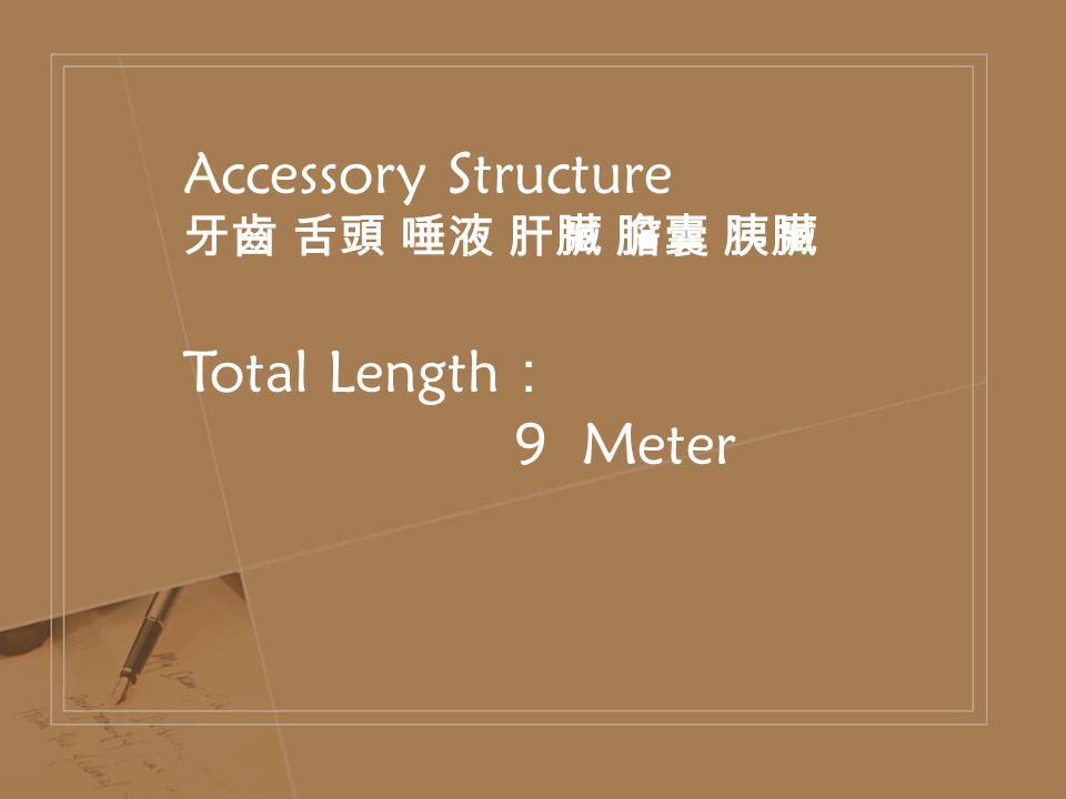 Accessory Structure 牙齒 舌頭 唾液 肝臟 膽囊 胰臟 Total Length : 9 Meter