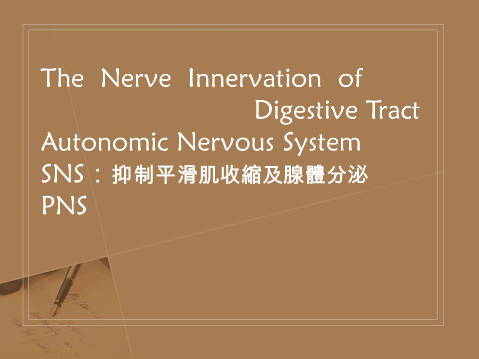 The Nerve Innervation of Digestive Tract Autonomic Nervous System SNS : 抑制平滑肌收縮及腺體分泌 PNS