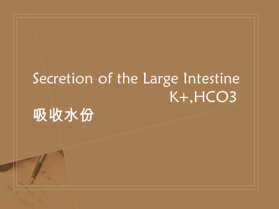 Secretion of the Large Intestine K+,HCO3 吸收水份