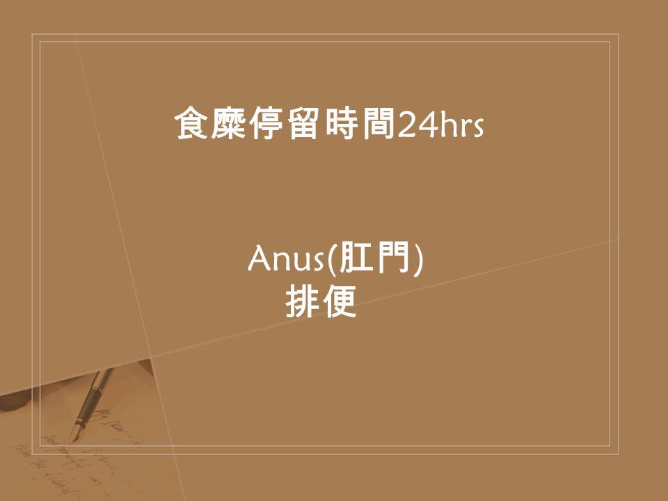 食糜停留時間 24hrs Anus( 肛門 ) 排便