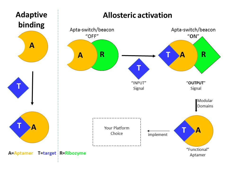 A A A A RR T T T T Adaptive binding Allosteric activation A=Aptamer T=target R=Ribozyme Apta-switch/beacon OFF Apta-switch/beacon ON INPUT Signal OUTPUT Signal AT Modular Domains Functional Aptamer Your Platform Choice implement