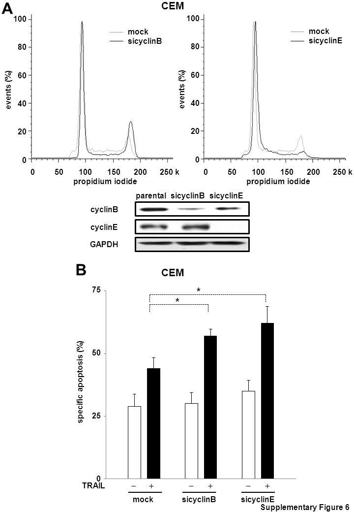 A B 100 80 60 40 20 0 events (%) 0 50 100 150 200 250 k propidium iodide mock sicyclinE mock sicyclinB 100 80 60 40 20 0 events (%) 0 50 100 150 200 250 k propidium iodide cyclinE cyclinB parental sicyclinB sicyclinE GAPDH CEM Supplementary Figure 6 75 50 25 0 specific apoptosis (%) mock sicyclinB sicyclinE * TRAIL       *