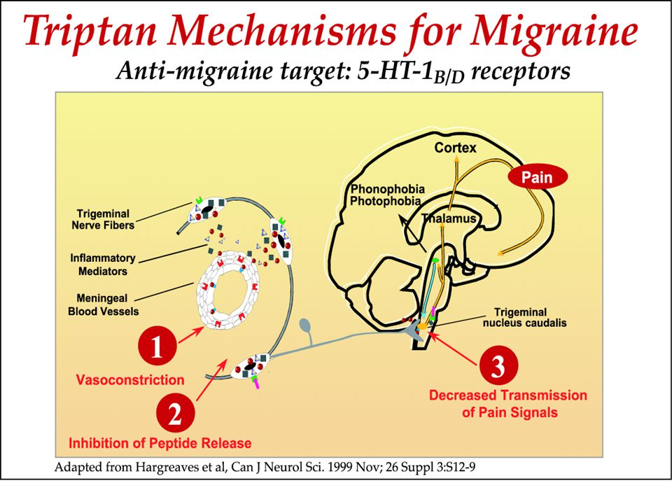 TriptansTriptans End result:End result: 1) Reversal of vasodilation 2) Decrease in neurogenic inflammation 3) Reduction of central nociceptive signal transmission to the thalamus and cortex 4) Cessation of ascending cortical pathways which lead to photo/phonophobia, N/V, central sensitization